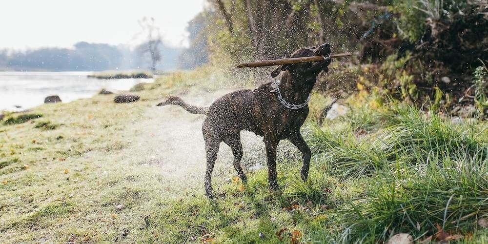 Hund tobt - Hundehaftpflicht von Haftpflichthelden